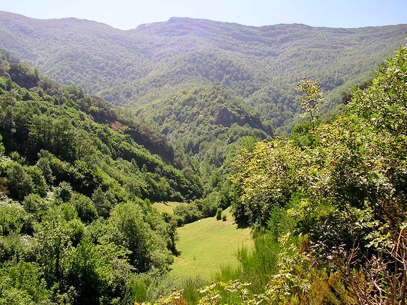 Sierra del Caurel